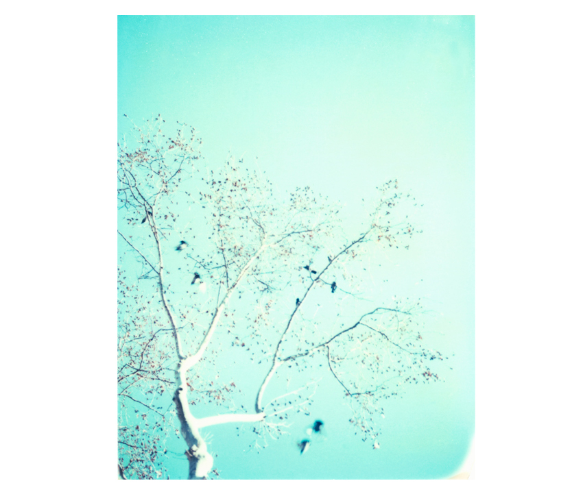 Flyingaway_cduarte_03.jpg