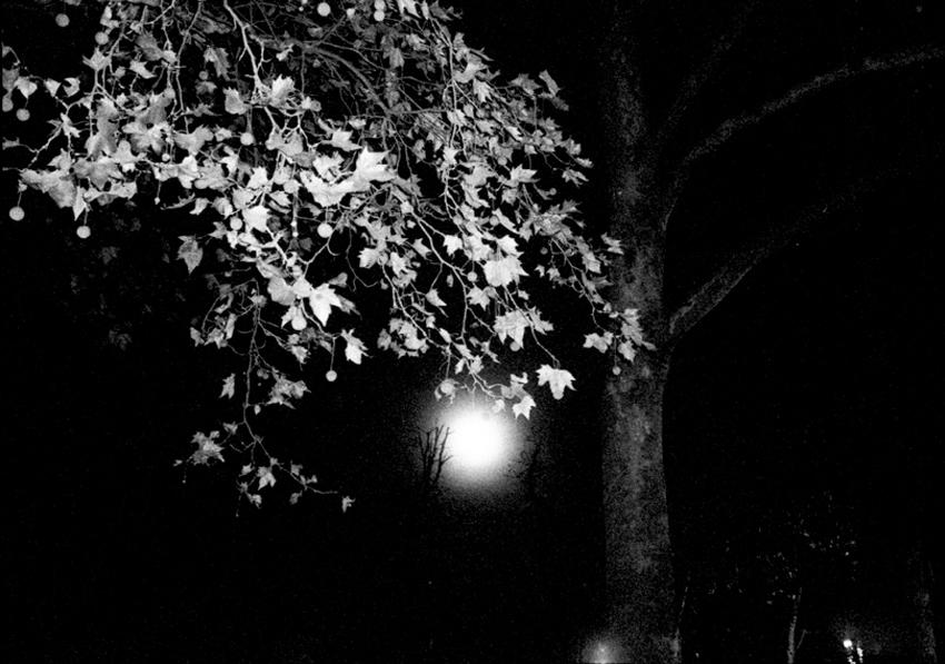 Paris_cduarte_18.jpg
