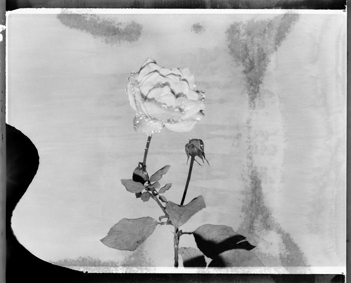 polaroid14-01.jpg