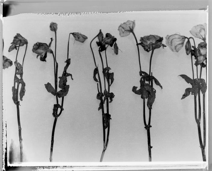 polaroid14-02.jpg